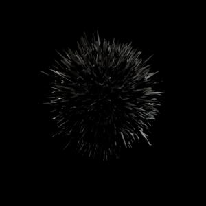 3-12-14-urchin