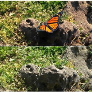 4-12-14-butterfly-model